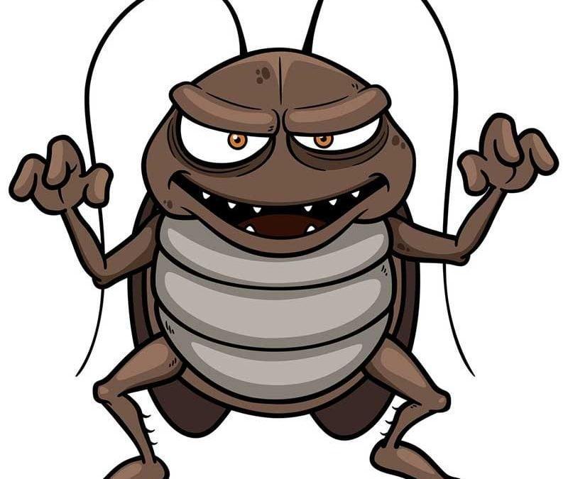 ¿Cucarachas? ¡No, gracias!
